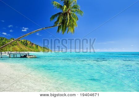 Palm tree hanging over stunning lagoon with jetty