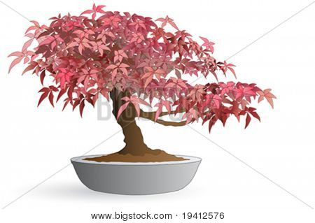 Isolated bonsai of japanese maple - Autumn colors