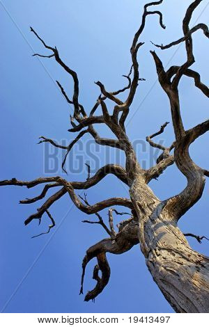 Dead Tree : South Africa