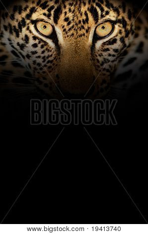 Piercing eyes of a leopard with copy space