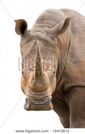 White Rhinoceros isolated on white; Clipping Path included; Ceratotherium Simum