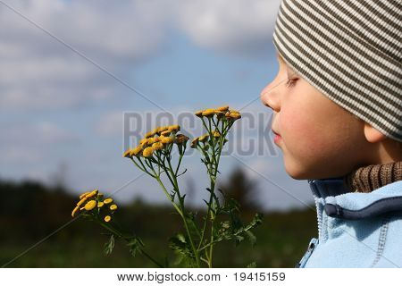 3 years old boy smelling autumnal flower outdoors