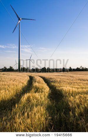A short path to alternative energy. Wind turbines on a wheat field