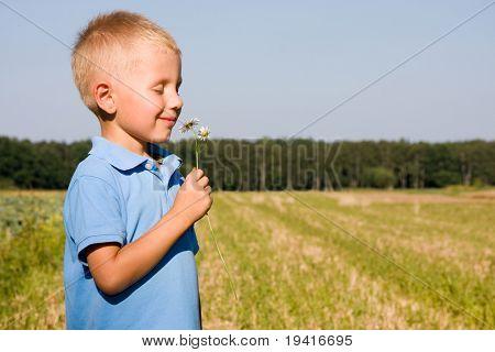 4 years boy smelling daisy flower on a field