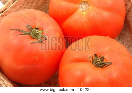 Hydroponic Tomatoes In Wicker