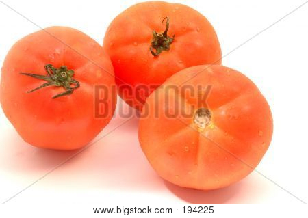 Hydroponic Tomatoes On White