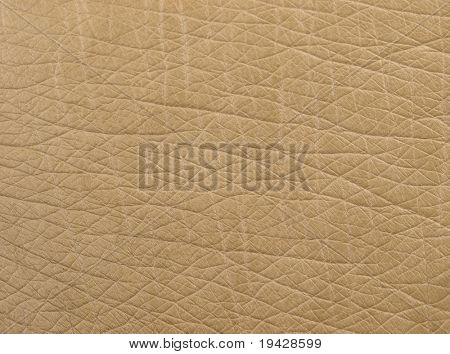 Ostrich leather texture