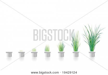 plants growing in stages. concept image for business growth. Excellent in  presentations as a graph.