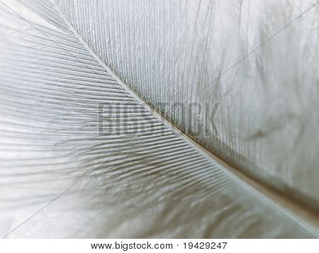 high magnification down feather back lit