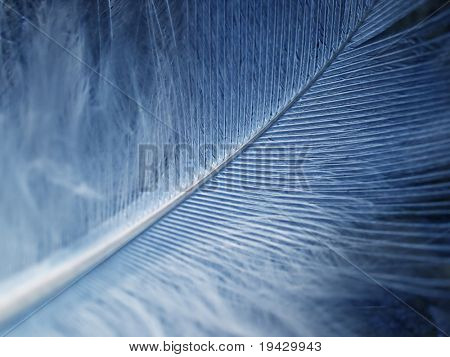 high magnification down feather