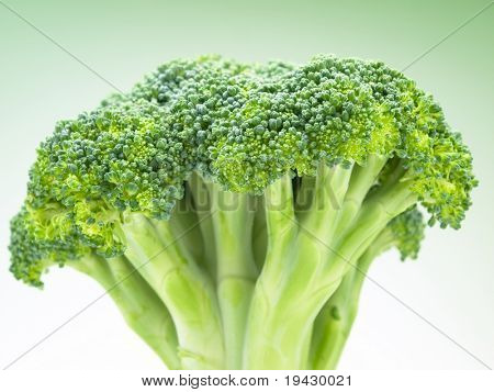 Broccoli head on green gradation background