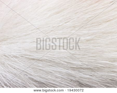 White fur, high magnification close up