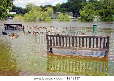Flooded Parkland