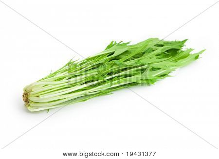 Mizuna (kyona, Xiu Cai, Kyona, Japanese Mustard) isolated on white with natural shadows.