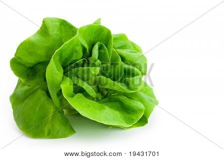Fresh salad lettuce (also known as butterhead, Boston, Bibb, Buttercrunch, and Tom Thumb, Arctic King) isolated on white