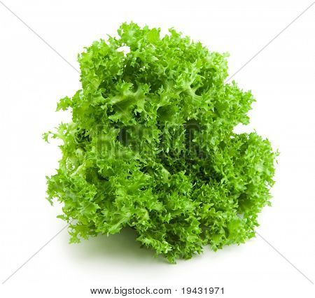 Fresh salad lettuce isolated on white