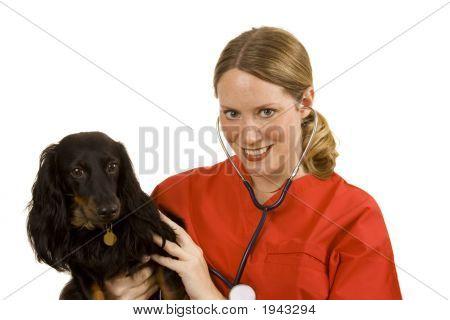 Vererinarian
