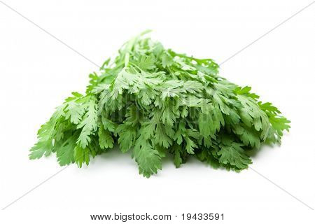Shungiku also known as tong hao, or edible chrysanthemum, Isolated on white. A leaf herb commonly used in asian food.