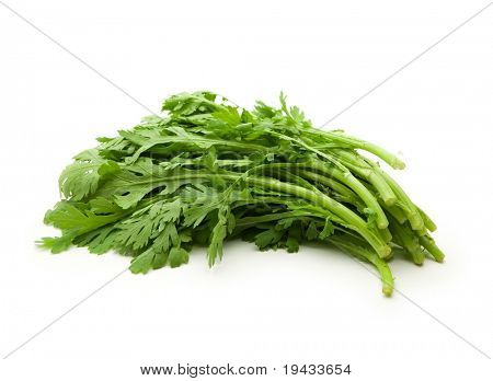 Shungiku, also known as tong hao, or edible chrysanthemum, Isolated on white. A leaf herb commonly used in asian food.