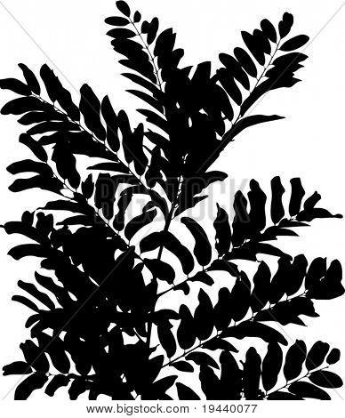 plant silhouette vector