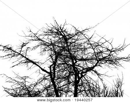 extreme detailed vector of tree silhouette
