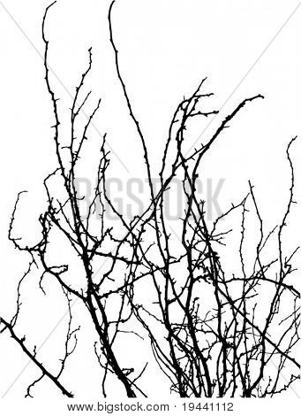 tree branches vector silhouette