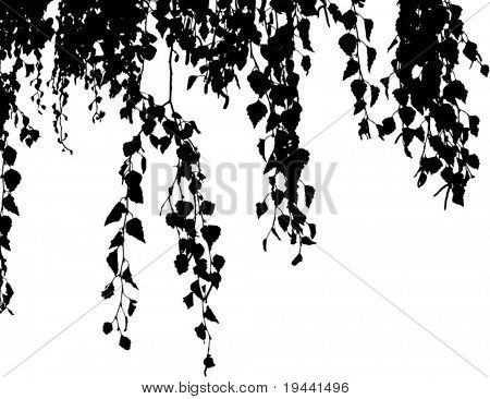 willow branch falling down - vector illustration