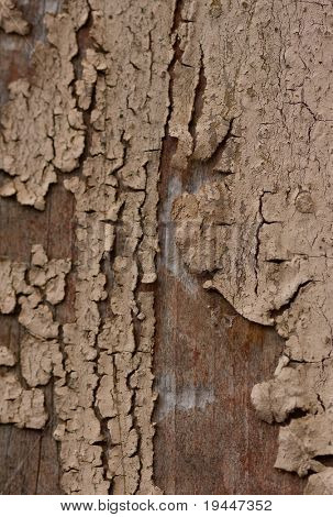 The invoice of an old paint on a tree