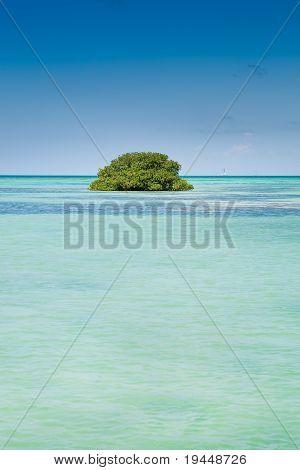 Insel der grünen Mangrovenwälder In einem blauen Ozean im Sommer