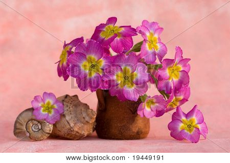 still life with seashells and flowers