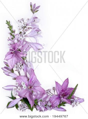 clematis flowers and hosts close-up