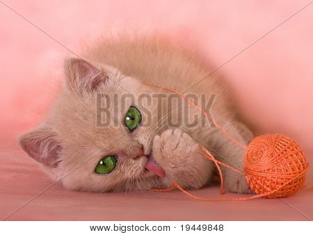 fluffy kitten playing with a ball threads