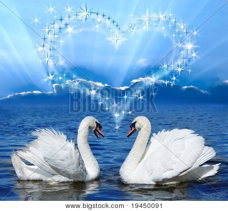pair of lovers swans