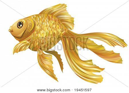 Color gold fish - design elements for decoration
