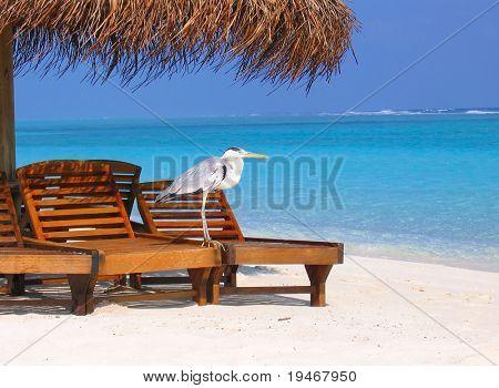 Sitting bird on holiday