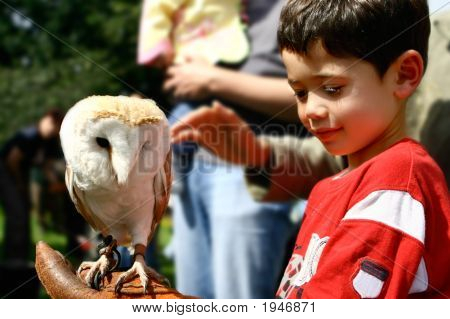Young Boy With Beautiful Tawny Owl