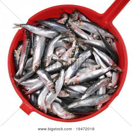 High resolution close up studio image of fresh uncooked anchovy in a red bowl