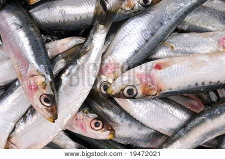 High resolution close up studio image of fresh uncooked anchovy.