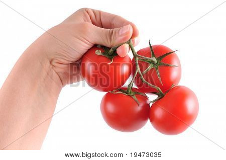 White background high resolution close up studio image of a woman's hand holding a cluster of fresh tomatoes