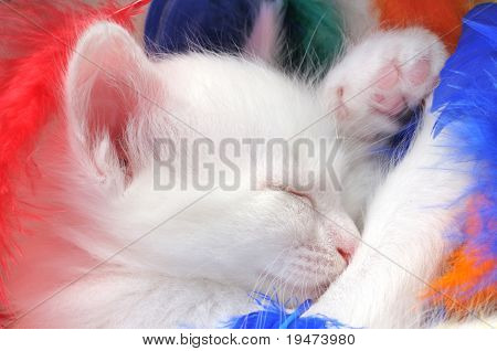 Cute white kitten sleeping.