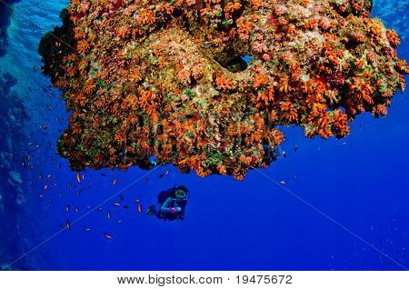 Woman scuba diver exploring reefs - a series of UNDERWATER IMAGES.