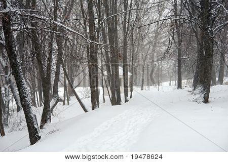 A snowstorm
