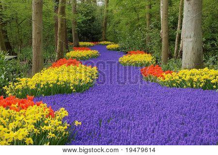 Flower bed, Keukenhof, the Netherlands