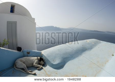 Dog Sleeping Santorini