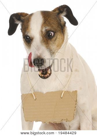 dog with a message - jack russel terrier with a blank sign around his neck