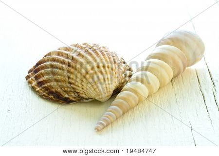 still life of two seashells on white wooden surface
