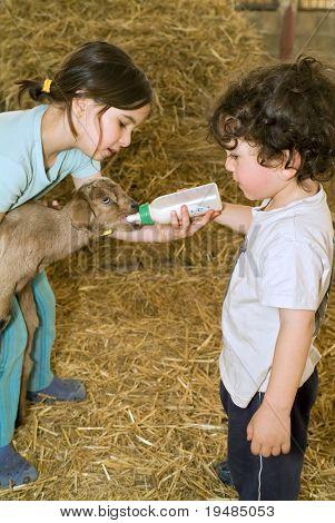 chico y chica cabra Bahía de alimentación con biberón en una granja