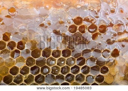 closeup of a honeycomb immerse in honey