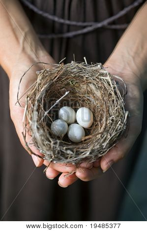 nest with eggs in woman's hands