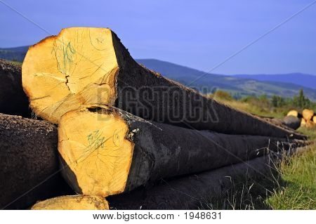 Pile Of Wood In The Nature Storage